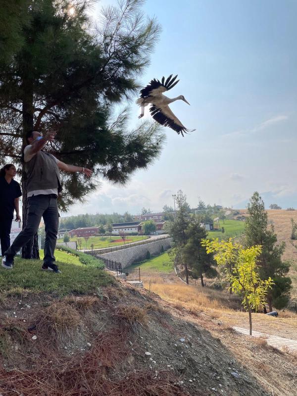 uçamayan yavru leylek doğaya salındı-yenigun gazetesi