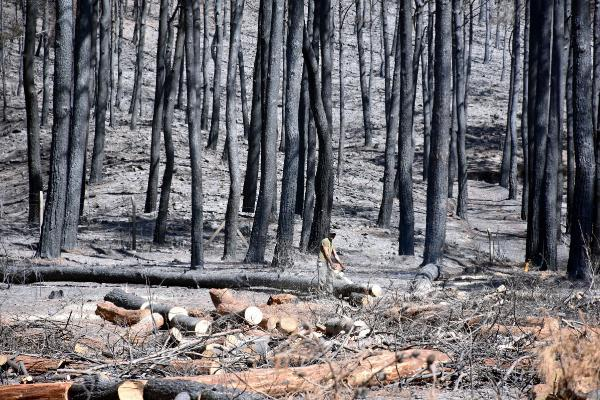 Marmaris'te bir ayda yangından zarar gören yaklaşık 500 hektar alan temizlendiyenigun